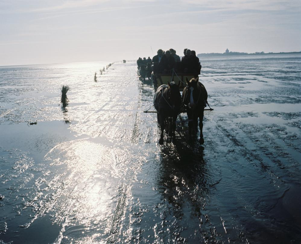 Olaf Scholz, Rückfahrt von Neuwerk über das Wattenmeer